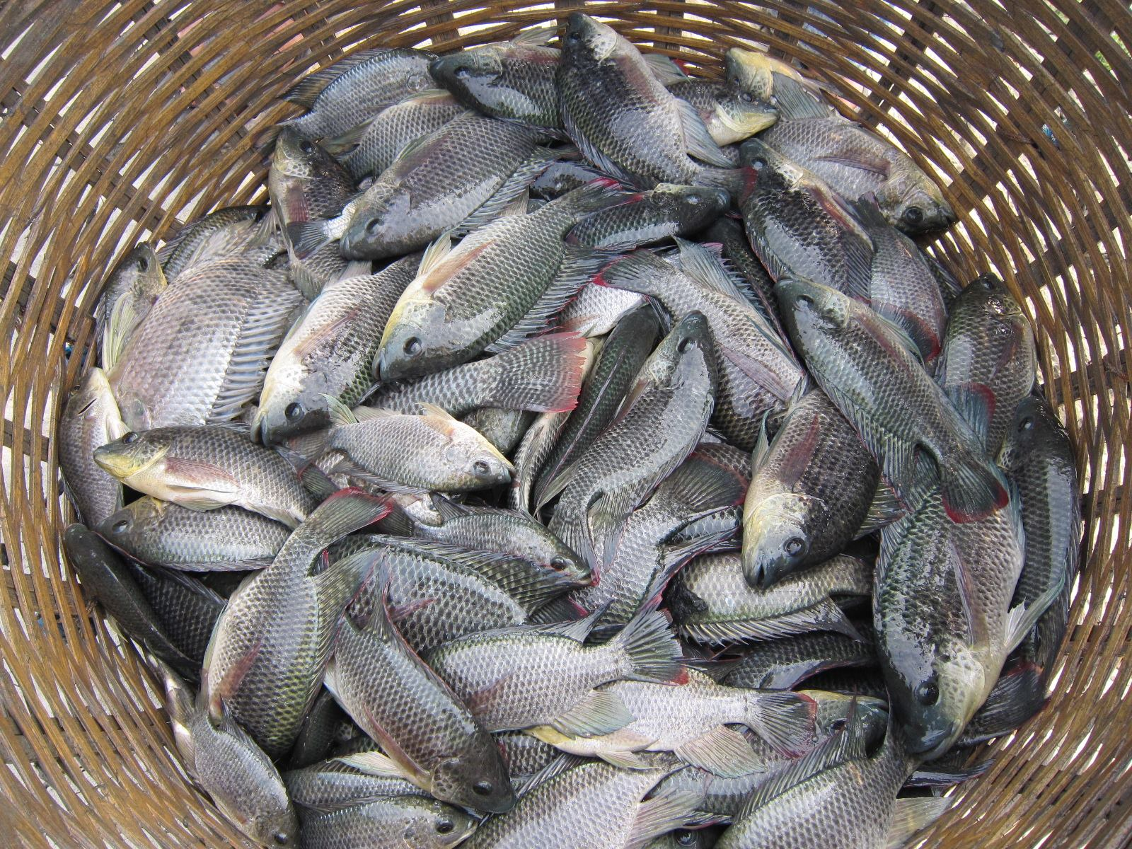 Buy fresh formalin free for Where to buy fish online